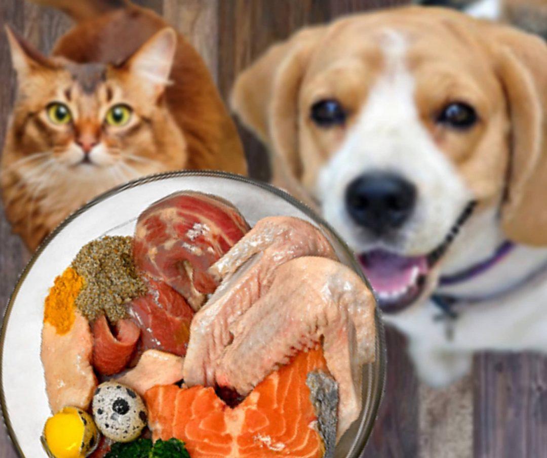 dieta barf perros y gatos